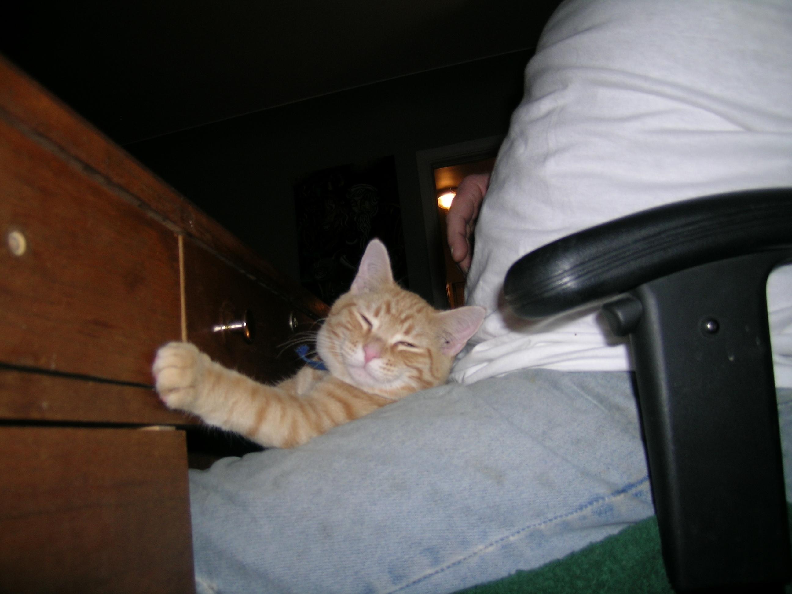 Meyer, the happy lap cat