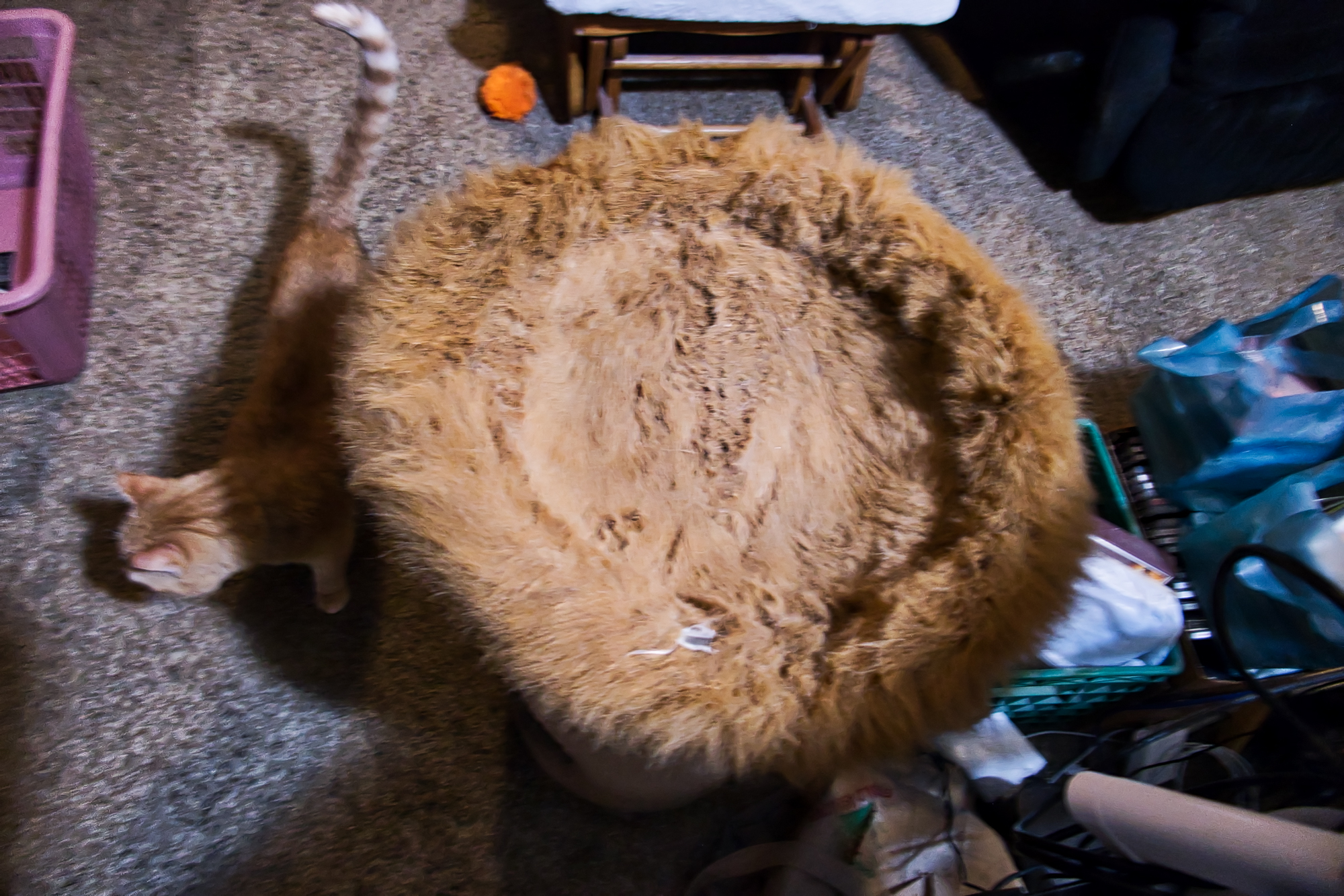 Meyer's Fox Fur Bedding